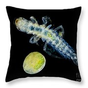 Caddisfly Larvae And Egg, Lm Throw Pillow