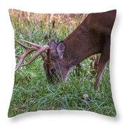Cades Cove Buck Throw Pillow