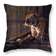 Caged King Of The Jungle Throw Pillow