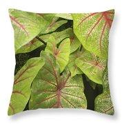 Caladium Leaves Throw Pillow