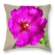 Calandrinia Flower Throw Pillow