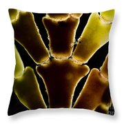 Calcareous Seaweed, Lm Throw Pillow