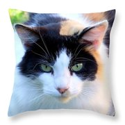 Calico 2 Throw Pillow