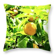 California Bright Orange Fruit Tree In Downtown Sacramento In Ca Throw Pillow
