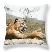 California Cougar Throw Pillow