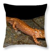 California Giant Salamander Throw Pillow