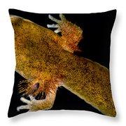 California Giant Salamander Larva Throw Pillow