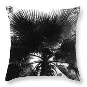 California Palm Tree Throw Pillow