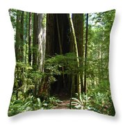 California Redwood Trees Forest Art Throw Pillow