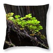 California Redwoods 4 Throw Pillow