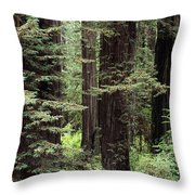 California Redwoods Throw Pillow