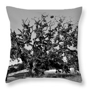 California Roadside Tree - Black And White Throw Pillow