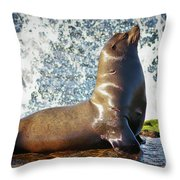 California Sea Lion At La Jolla Cove Throw Pillow by Sam Antonio Photography
