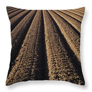 Califronia, View Throw Pillow