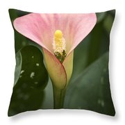 Calla In The Mist Throw Pillow