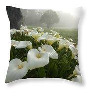 Calla Lilies Zantedeschia Aethiopica Throw Pillow by Keenpress