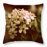 Callery Pear Blossoms Throw Pillow