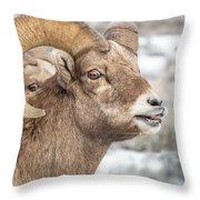 Calling All Ewes Throw Pillow