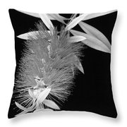 Callistemon Beauty 1 Throw Pillow