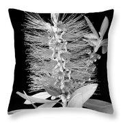 Callistemon Beauty 5 Throw Pillow