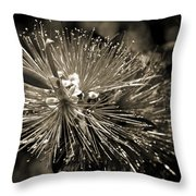 Callistemon II Throw Pillow