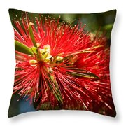 Callistemon Throw Pillow