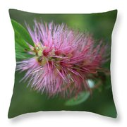 Callistemon Viminalis Taree Pink Weeping Bottlebrush Flowering Trees Of Hawaii Throw Pillow