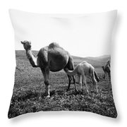 Camel And Young Throw Pillow