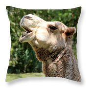 Camel Chewing Throw Pillow