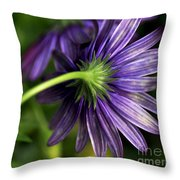 Camera Shy Daisy Throw Pillow