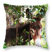 Camera Shy Donkey Throw Pillow