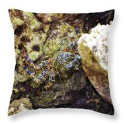 Camouflaged Crab Throw Pillow