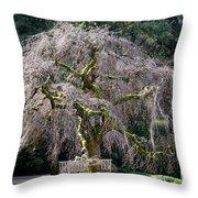Camperdown Elm Tree Throw Pillow