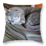Can I Come With You Throw Pillow