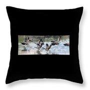 Canada Geese 1390-011618-1 Throw Pillow