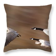 Canada Geese In Flight Throw Pillow