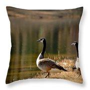 Canada Geese In Golden Sunlight Throw Pillow