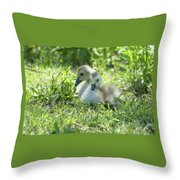Canada Goslings Throw Pillow
