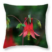 Canadian Columbine Throw Pillow