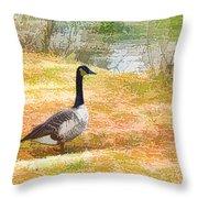 Canadian Geese 6 Throw Pillow