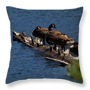 Canada Goose Family Line-up Throw Pillow