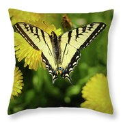 Canadian Swallowtail Butterfly Throw Pillow