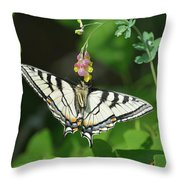 Canadian Tiger Swallowtail Butterfly-underside Throw Pillow