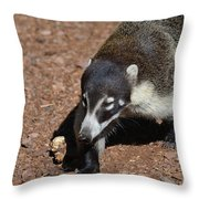 Candid Of A Coati Throw Pillow