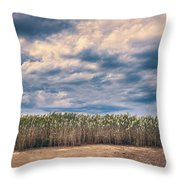 Cane Thicket Throw Pillow