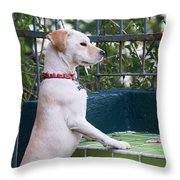 Canica 4 Throw Pillow