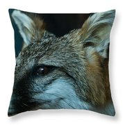 Canis Species Throw Pillow by Douglas Barnett