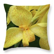 Canna Amarillo IIi Throw Pillow by Suzanne Gaff