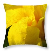 Canna At Sunrise Throw Pillow
