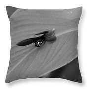 Canna In Black And White Throw Pillow
